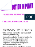 Reproduction in Plant Ida