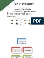 Mutación y Evolución