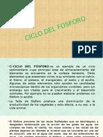Ciclo Del Fosforo Exposi
