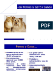 01.1 Nutrición en Perros y Gatos Sanos