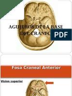 Base de Craneo Endocraneal