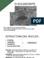Acidos Nucleicos y Nucleo