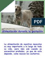 03.1 Control Alimenticio de Perras en Gestación