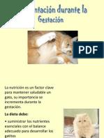 04.1 Control Alimenticio de Gatas en Gestación