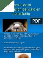 07.2 Control Alimenticio de Gatos en Crecimiento