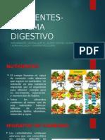 Nutrientes Sistema Digestivo