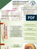 Seminario de AnatomÃ-A