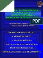 Diarrea Neo y Prod