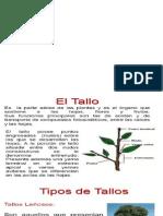 Caracteres de Las Angiospermas_el Tallo