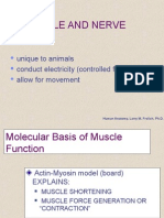Muscle Nerve