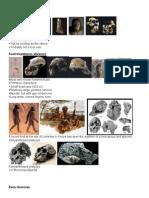 The Australopithecines
