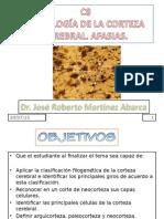 c8-histologc3ada-de-la-corteza-cerebral-afasias.ppt