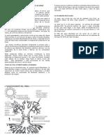Funcionamiento y Anatomía de Un Árbol