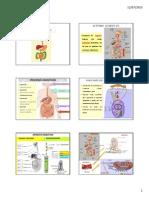 Diapositivas Digestiondiapositivas_digestion.pdf