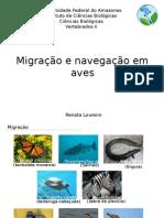 Migração e Navegação Em Aves