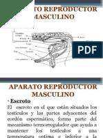 Aparato Reproductor Masculino[1]