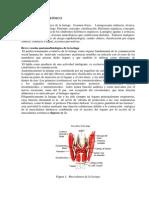 cap.4_libro_1.