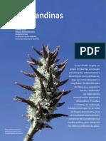 puyas.pdf