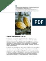 Procesamiento Del Cacao