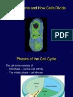 Celldivision.pdf