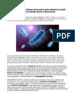 Roter Cistiberry Azione Meccanica Anti-Adesiva in Studi Clinici Su Cistite Acuta e Ricorrente