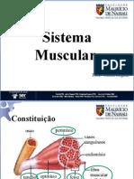 04-Músculos