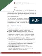 INFORME N°01 - M.T. ; RESULTADOS  Y CONCL