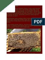 RODITELJSKE PČELE