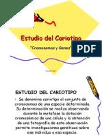 Estudio del cariotipo