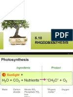 6.10 Photosynthesis