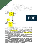 Formarea legaturii peptidice