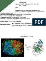 CATALAZA Peroxid de Hidrogen:Peroxid de Hidrogen Oxidoreductaza