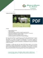 Apuestas Productivas Para Arauca