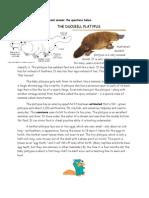 English Yr 4 Comprehension the Duckbill Platypus