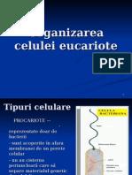 LP 7 - Eucariote +