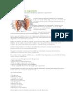 Doenças pulmonares ocupacionais