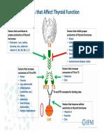 Thyroid Factors
