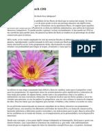 Article   Flores De Bach (10)