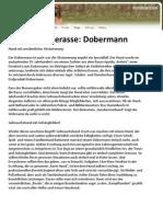 Hunderasse Dobermann