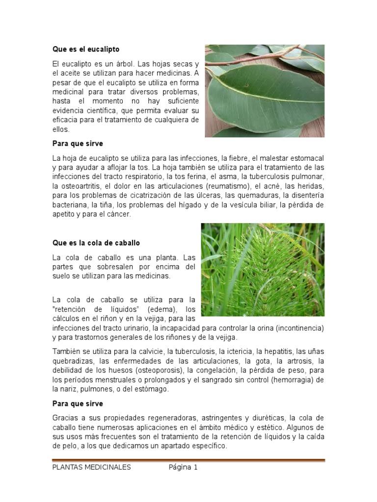 Que Es El Eucalipto Plantas Medicinales Medicina