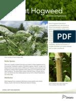 Giant Hogweed Fact Sheet