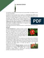 Plantas en Peligro de extincion en Centroamerica