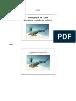 Anfibios Slides Word (1)