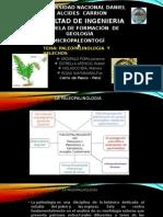 paleopalinologia y helechos