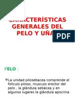 05 - Pelo e Unhas - Semiologia (1)