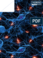 Es La Neuroplasticidad en El SNC El Eslabon22