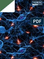 Es La Neuroplasticidad en El SNC El Eslabon