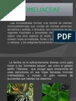 Bromeliaceae K