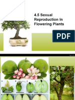 4.5 Reproduction in Flowering Plants