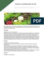 Gemüse-Power Vitamine Und Mineralien Für Die Gesundheit
